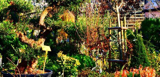 Ádám – kert