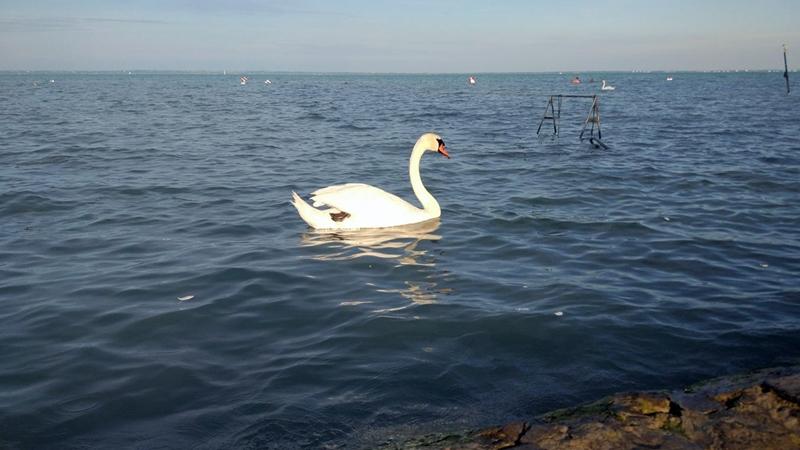 Kiváló a Balaton vízminősége, de azért akadnak gondok