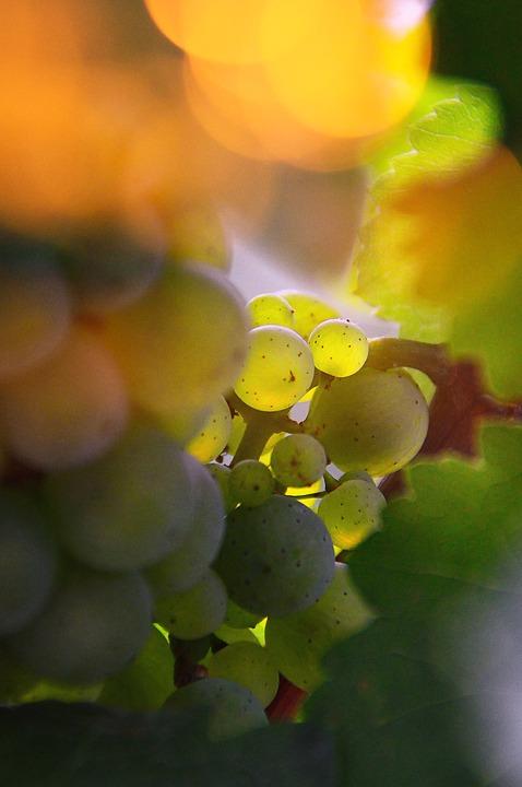 Kiválasztották Veszprém idei borát